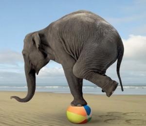 elephant-balance-300x259